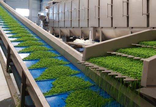 food conveyor system for vegetable industry