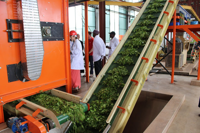 conveor belt for tea industry