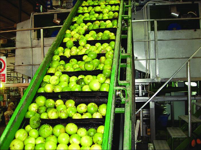 conveyor belt for fruit industry